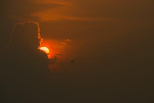Безкоштовне стокове фото на тему «lukkachhipi, вечірнє сонце, фотографія природи, хованки»