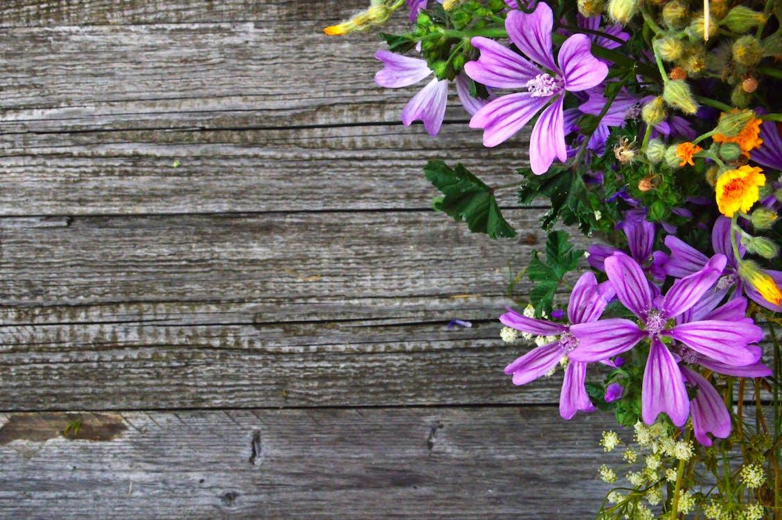 anlegg, blomst, blomster