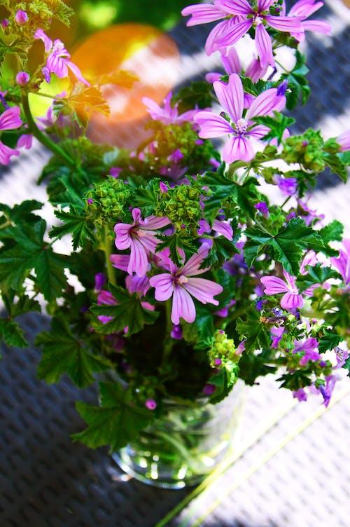 Pink Petal Flower Plant