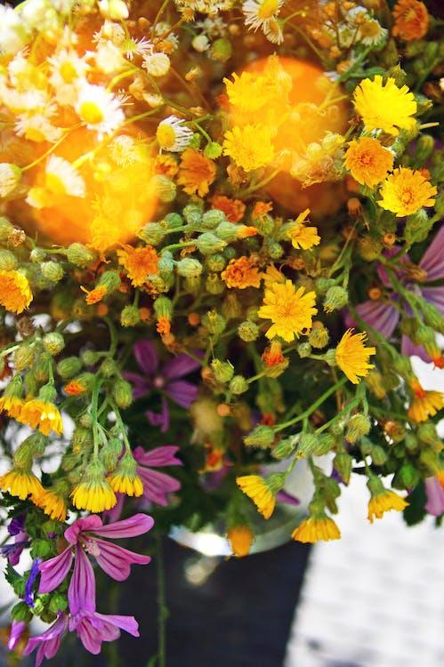 bouquet, bourgeons, bourgeons de fleurs