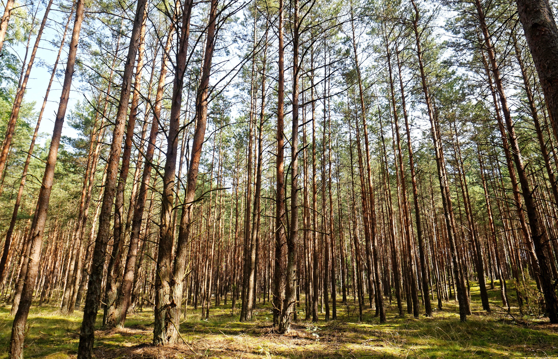 Immagine gratuita di alberi, ambiente, boschi, colori