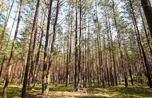 Photos gratuites de arbres, bois, branches d'arbre, brillant