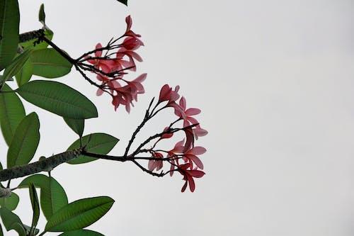 Kostnadsfri bild av blomma, natur