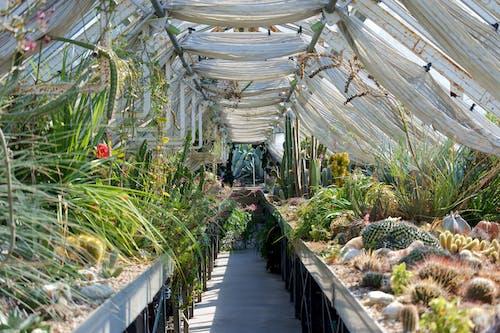 Gratis stockfoto met botanisch, botanische haus, botanische tuin, cactus