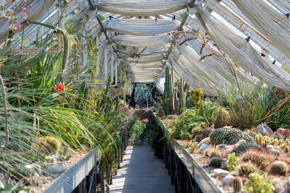 botanická záhrada, botanický, botanický dom