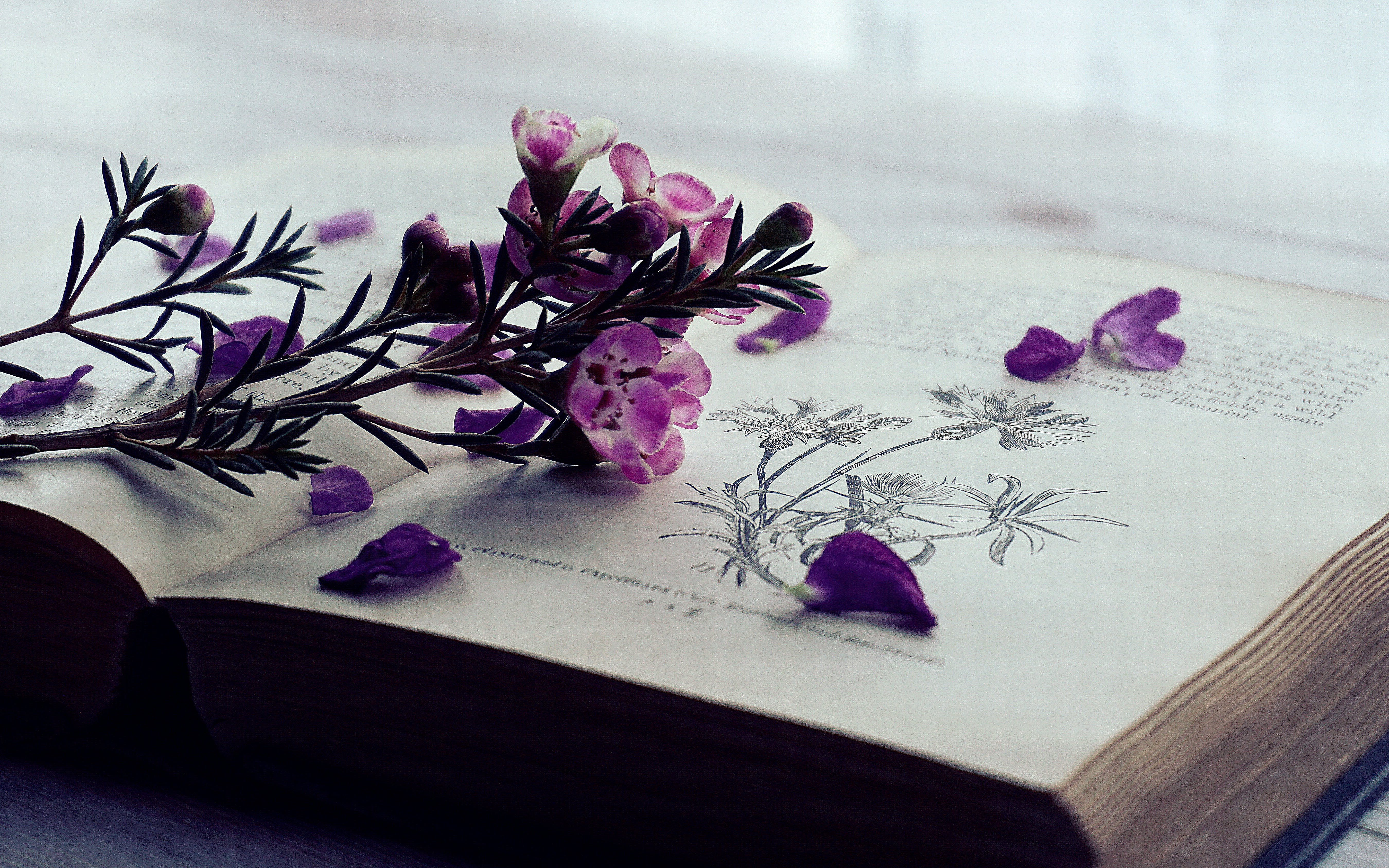 Selective Focus Photography of Purple Flowers on Book Page