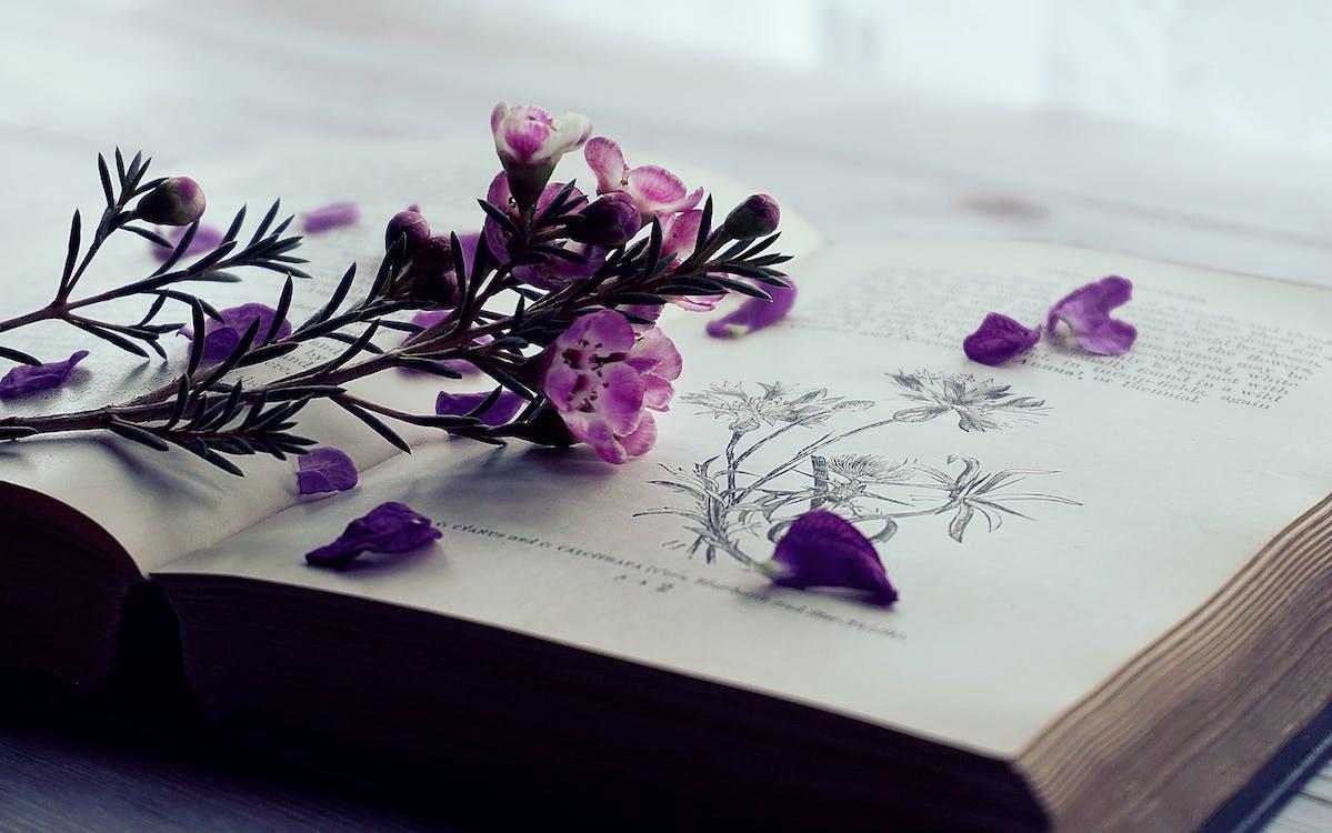 กลีบดอก, กลีบดอกไม้, การตกแต่ง