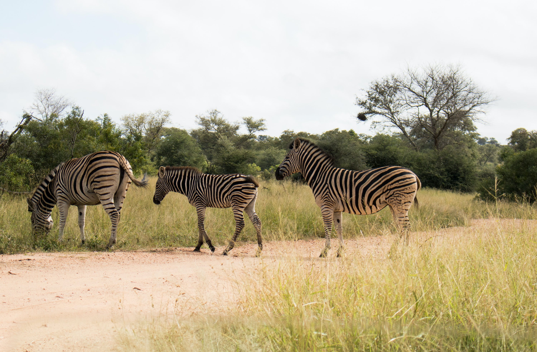 Free stock photo of dirt road, off-road, wild animal, wildlife