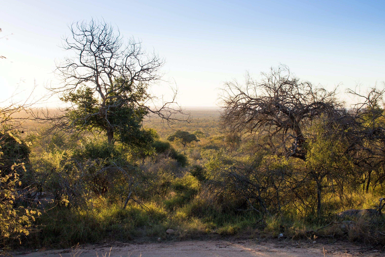 Základová fotografie zdarma na téma krajina, savana, sluneční záře