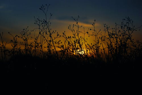 Kostnadsfri bild av gräs, gyllene sol