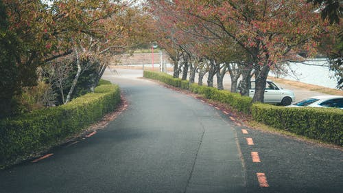 Photos gratuites de arbre, japon, momiji, route