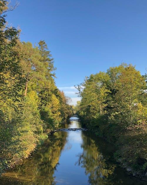 Kostenloses Stock Foto zu bäume, blauer himmel, himmel, klarer himmel