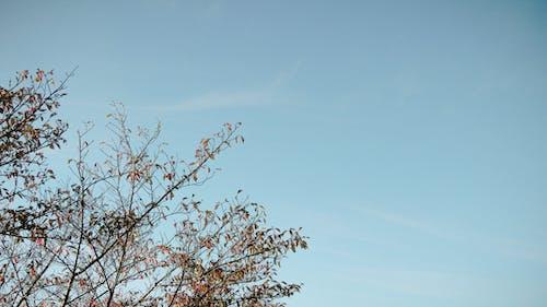 Photos gratuites de arbre, bleu, branche, branches