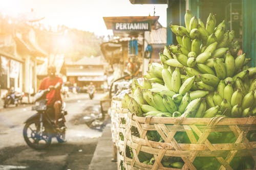 Bunch of Green Bananas in Basket