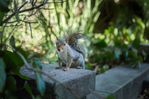 Close-Up Photo of Squirrel