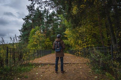 Бесплатное стоковое фото с деревья, дневной свет, дорога, зеленый