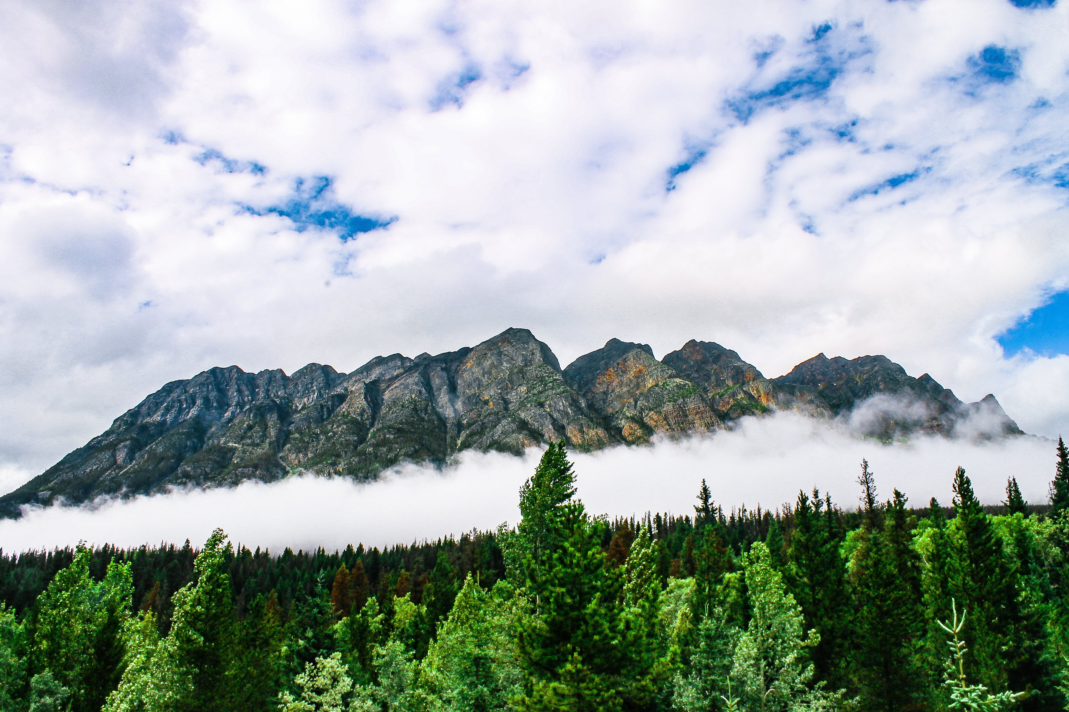 Scenic View of Mountain and Forest