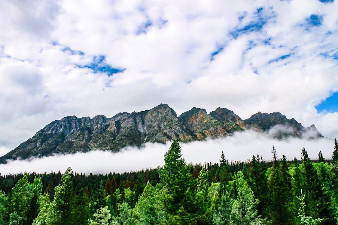 chmury, drzewa, drzewa iglaste