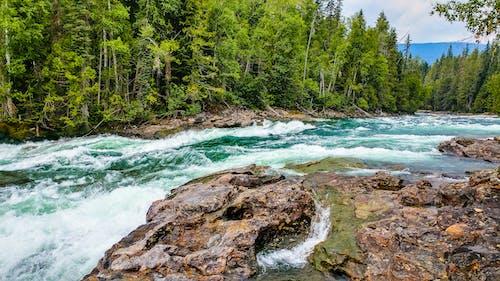 Photos gratuites de arbres, beauté naturelle, berge, berge de rivière