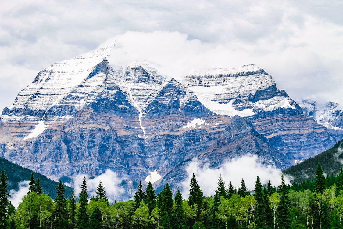 4k tapeter, barrträd, berg