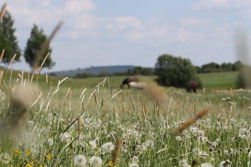Gratis stockfoto met akkerland, beesten, bloemen, blurry achtergrond