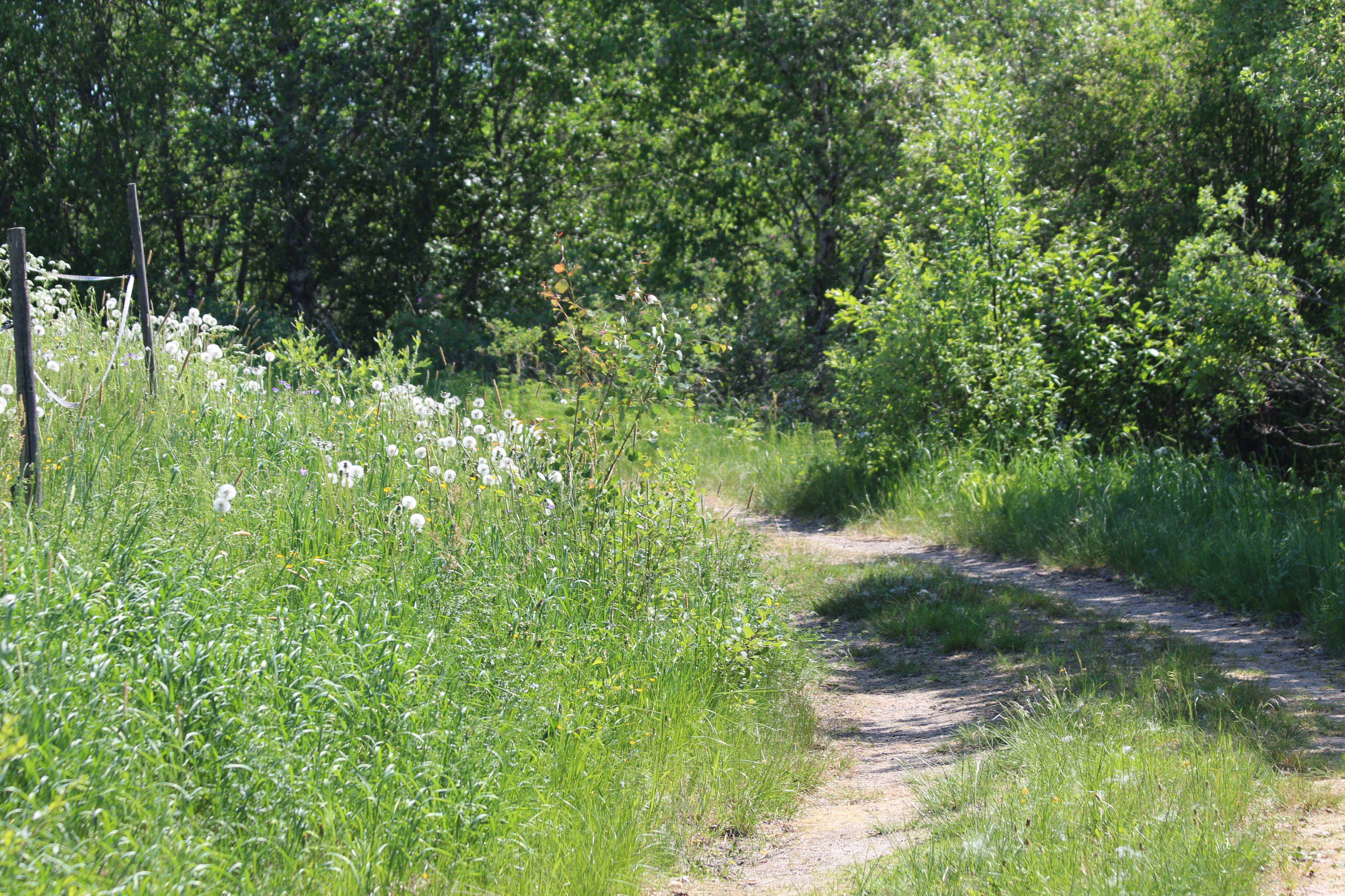 Free stock photo of flowers, nature, path, tall grass