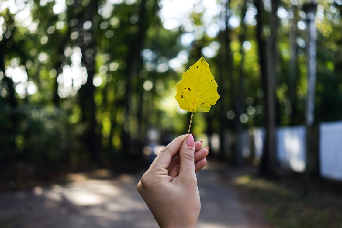 Close-Up Photo of Person Holding Leaf
