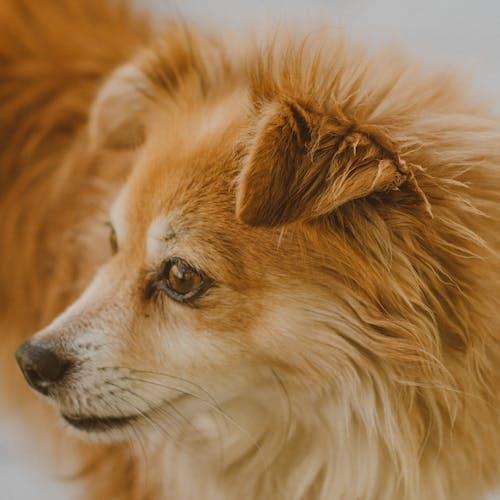 Крупным планом фото коричневой собаки