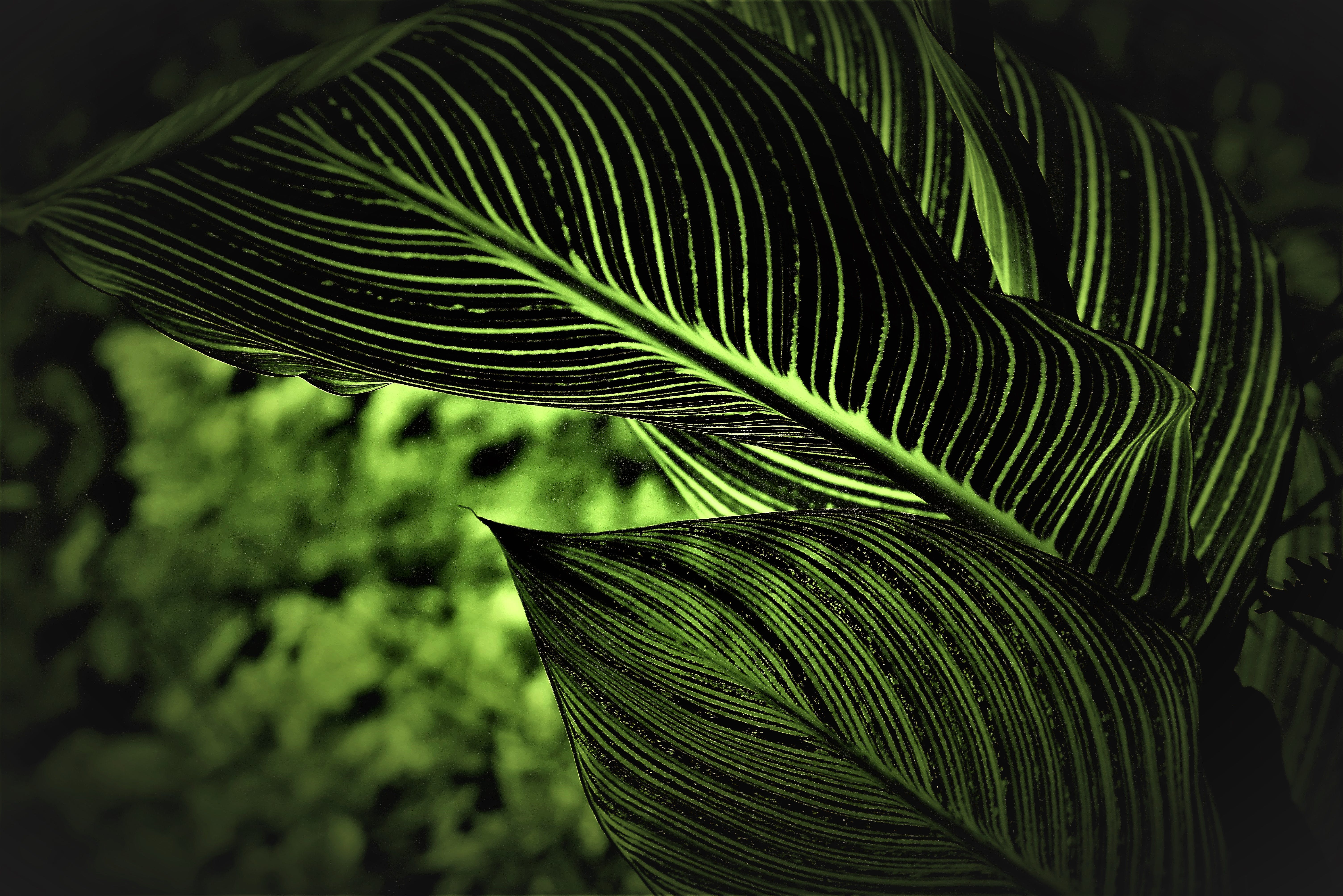 Shallow Focus Photography of Green Plant Leaves
