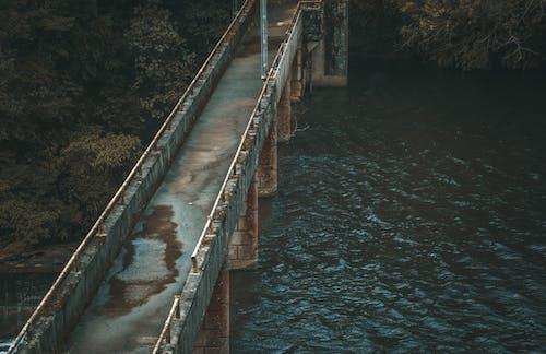 Foto d'estoc gratuïta de a l'aire lliure, aigua, arbres, formigó
