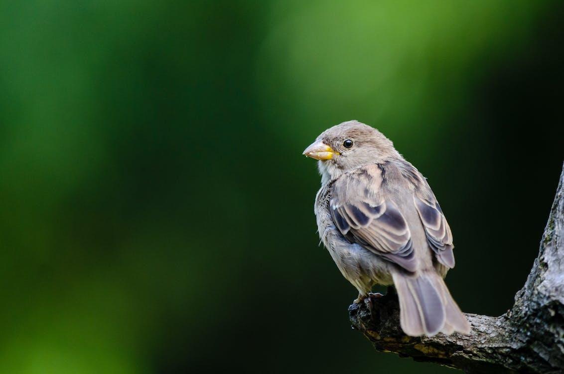 bertengger, binatang, bulu burung