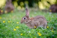 field, animal, cute