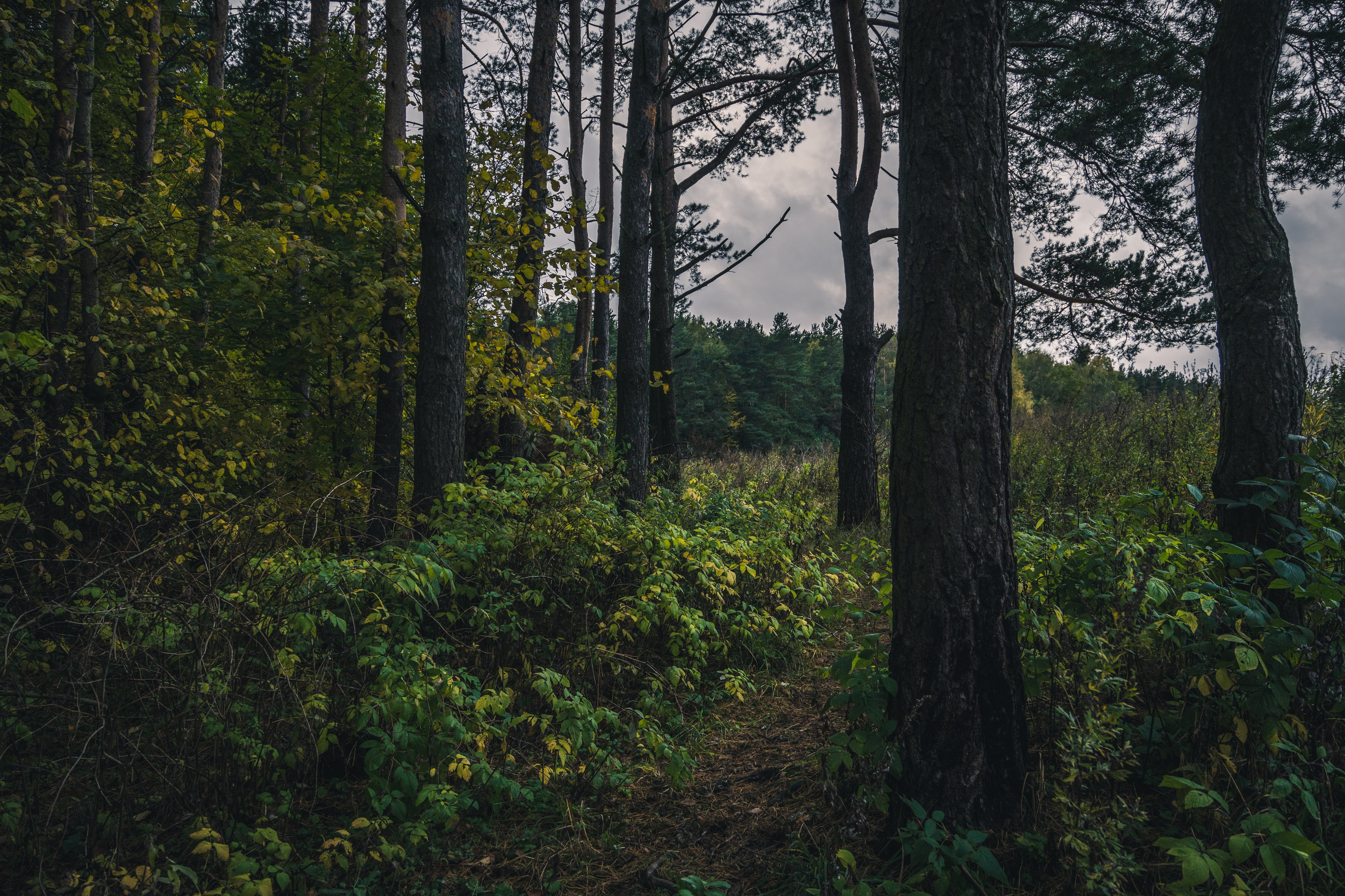 Green Forest Trail