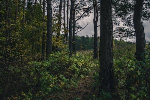 Foto profissional grátis de árvores, cênico, ecológico, floresta