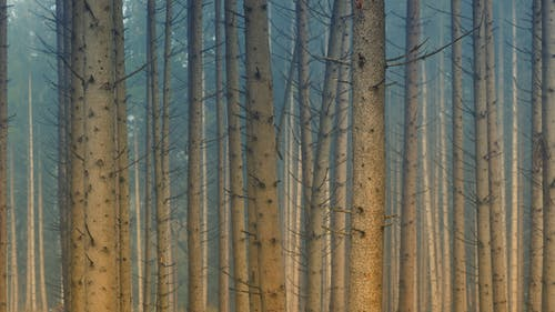 Základová fotografie zdarma na téma barvy, denní světlo, kmeny stromů, krajina