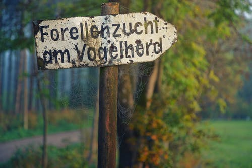 Бесплатное стоковое фото с вывески, деревья, дневной свет, дорога