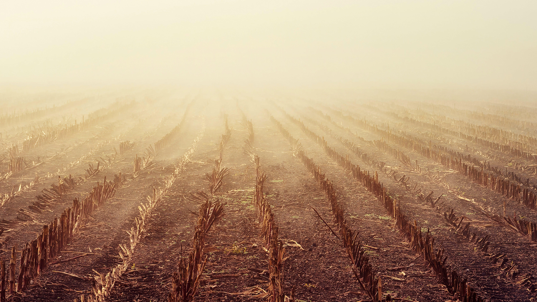 Foto stok gratis alam, berkabut, bidang, kabut