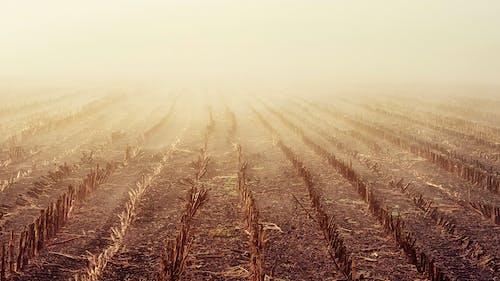 Základová fotografie zdarma na téma denní světlo, farma, hřiště, krajina