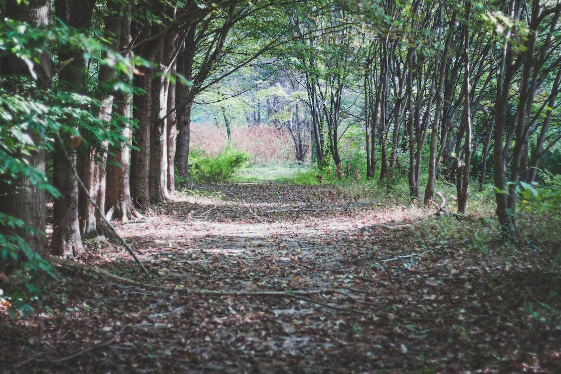 arboles, bosque, brillante