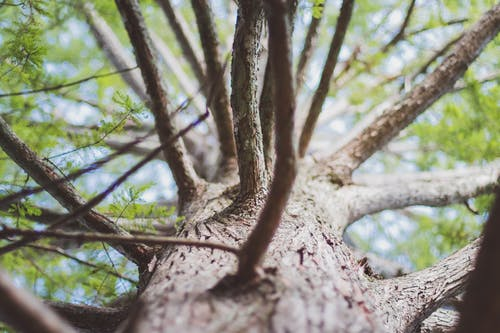 Selective Focus Photo of Brown Tree Trunk and Branches
