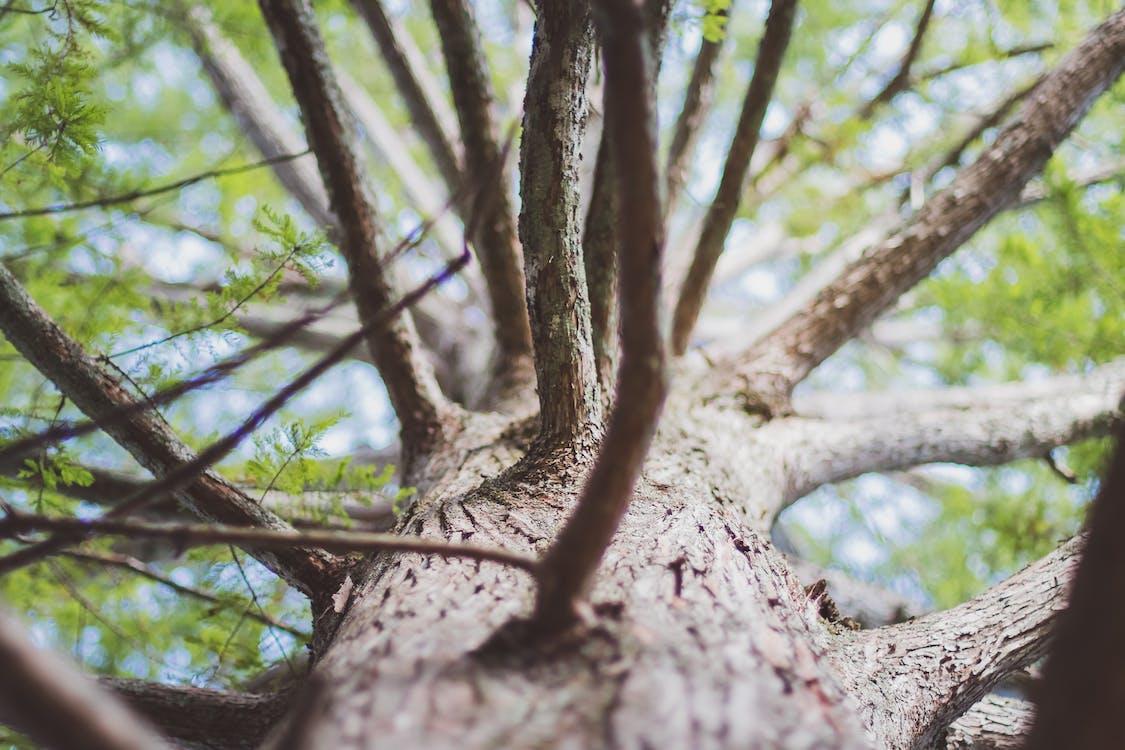 arbore, buștean, copac