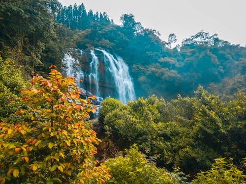 ağaçlar, çağlayanlar, çevre, dağ içeren Ücretsiz stok fotoğraf