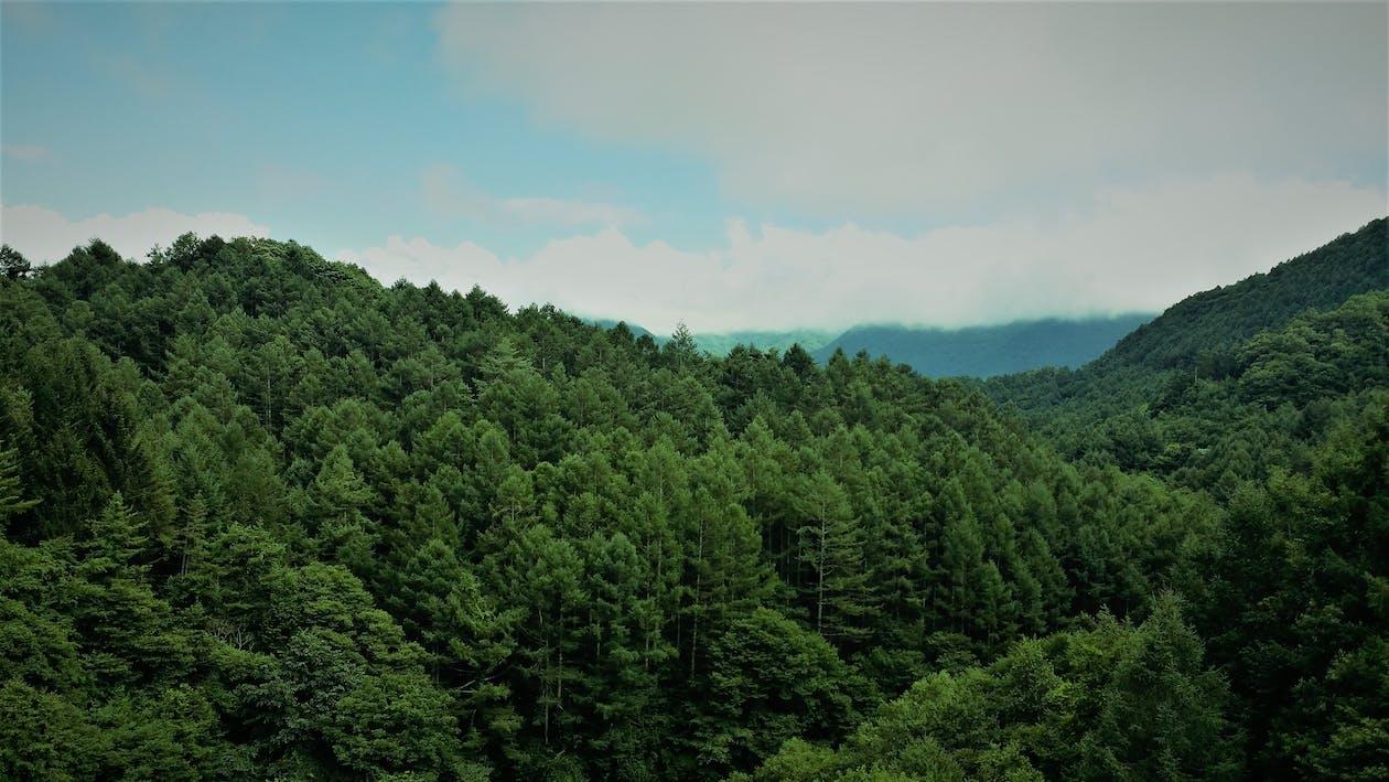 ağaçlar, bulutlar, büyüme
