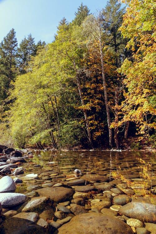 água, árvores, calmo