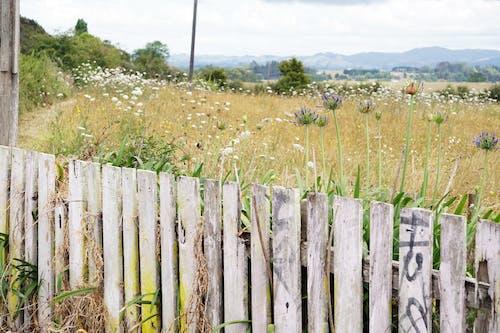 คลังภาพถ่ายฟรี ของ กั้นรั้ว, ดอกไม้, นา, พุ่มไม้