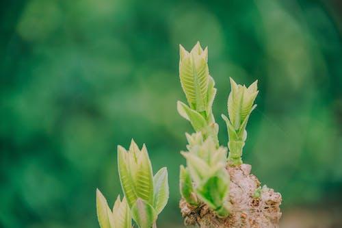 Ilmainen kuvapankkikuva tunnisteilla kasvi, kasvu, keskittyminen, kuvan syvyys