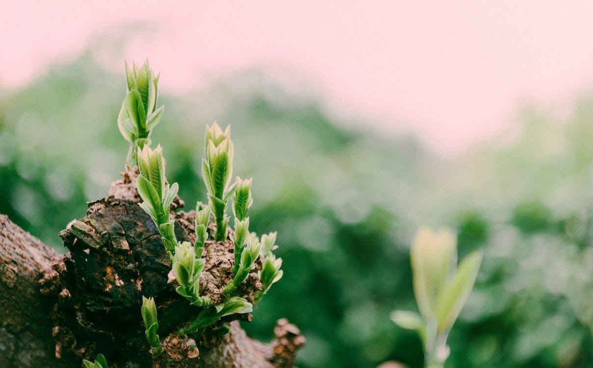무성한, 성장, 식물