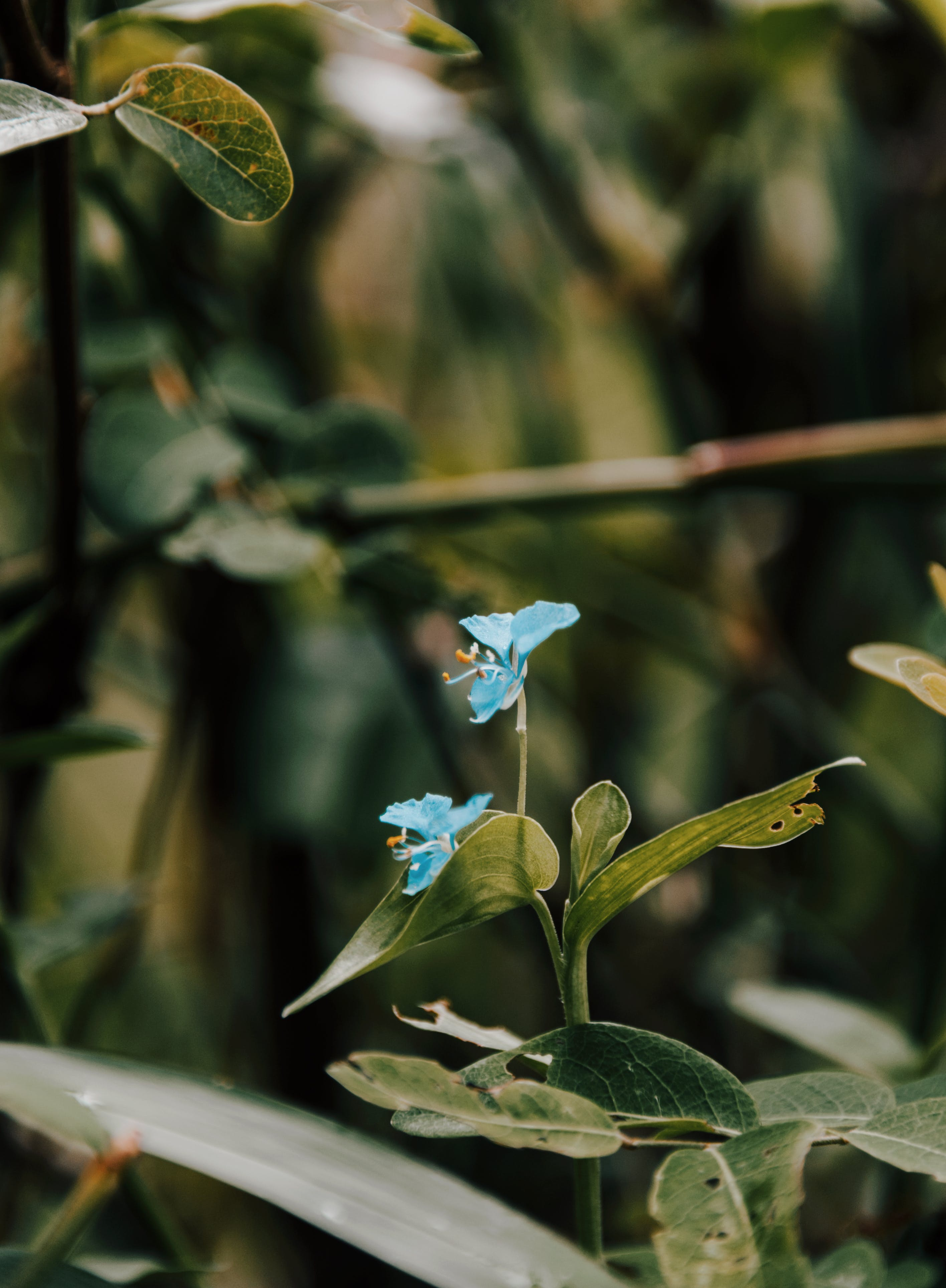 Close-Up Photo of Blue Flowers