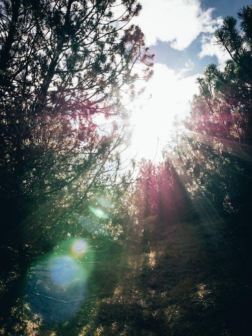 Darmowe zdjęcie z galerii z drzewa, flara obiektywu, jasny, kolor