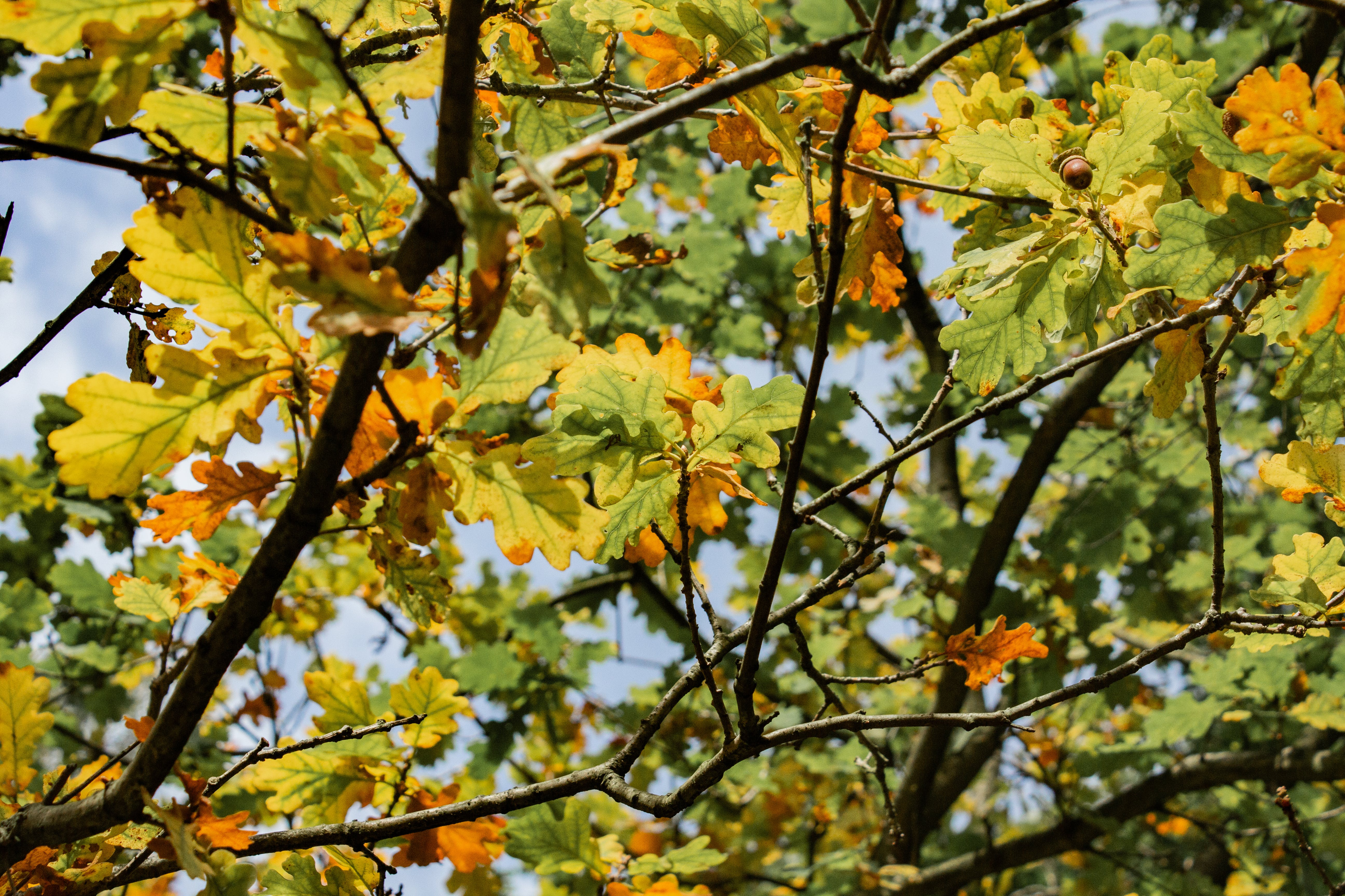 Free stock photo of forest, trees, leaf, leaves